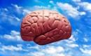 Zijn wij ons brein (1)?