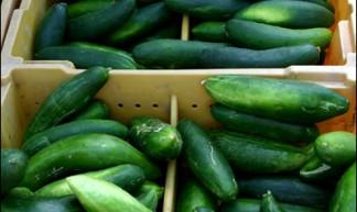 Een doos met komkommers.