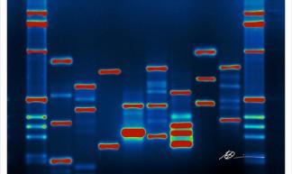 Micah's DNA - Micah Baldwin