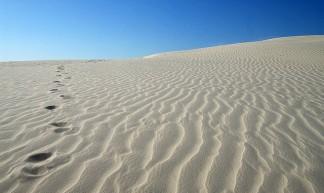 Desert Track - guilherme jofili