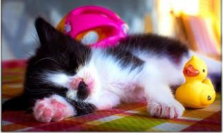 Sleeping - Moyan Brenn