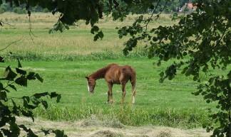 paard in de wei - Gerard Stolk