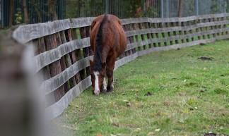 Paard - doevos