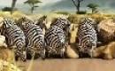 Dikke dieren cartoon