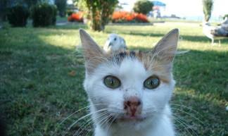 Cat&Bird - onurati
