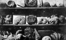 cc Wikimedia Commons Lous Jacques Mande Daguerre Shells and Fossils 1839