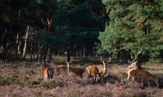 Nationaal Park De Hoge Veluwe - Frans de Wit
