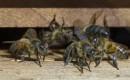Bijen en bellen