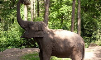 Olifant - Wanja Krah
