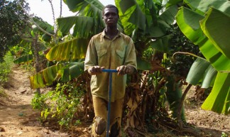 Farmer irrigating with treadle pump in Mali - IFPRI -IMAGES