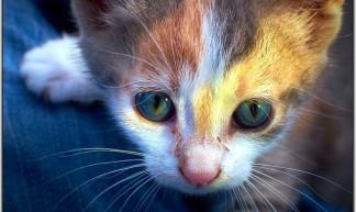 Kitten - Moyan Brenn