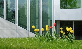 Dutch tulips - Rene Passet