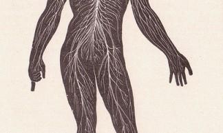 page 214 Nervous System - Sue Clark