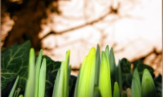 Green Shoots - Howard