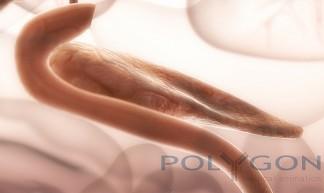 pancreas medical illustration by Polygon - Polygon  Medical Animation