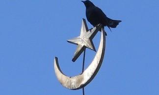 Islamic Bird - Michael Coghlan