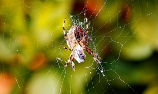 Spider web - @Doug88888
