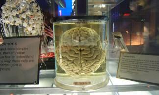 Human Brain - Simon Scott