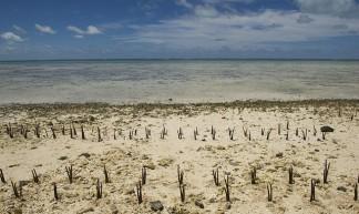 Climate Change Effects in Island Nation of Kiribati - United Nations Photo