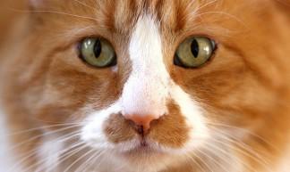 Cat - Kevin Dooley