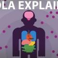 Hoe komt het dat het Ebola-virus zo dodelijk is? In dit korte filmpje wordt…