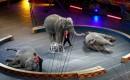 Staatssecretaris Dijksma wil verbod op wilde circusdieren