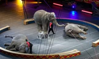 Elephant Tricks - Matthew Barton