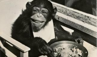 pc chimpansee Joke 1965 - janwillemsen