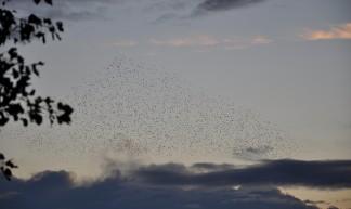 Swarm! - Erik bij de Vaate