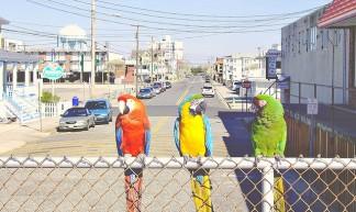 Three Birds on a Boardwalk - LancerE