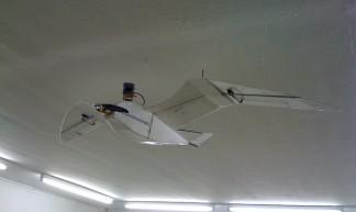 seagull drone - Amanda Steggell