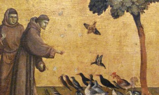St. Francis addressing the birds (predella) - Amanda