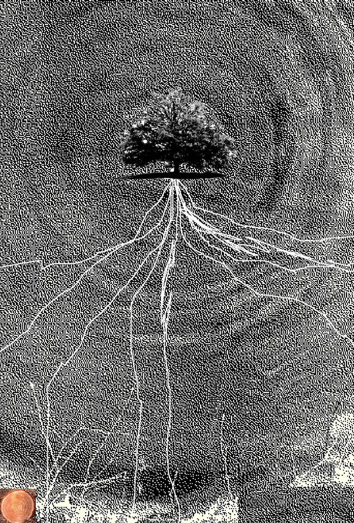 cc Flickr Howl Arts Collective tree roots graphic via École de la Montagne Rouge