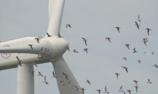 線西風機和鳥類飛行互動關係 Interactions between wind turbines and birds: alternation of avian flight path 13-5 - 台灣水鳥研究群 彰化海岸保育行動聯盟