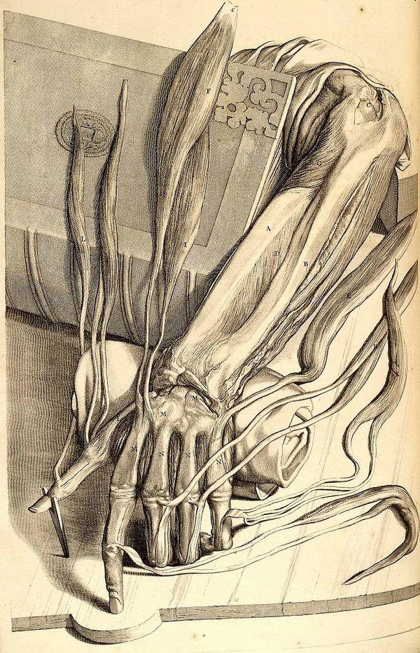 Een van De Lairesse gemaakte anatomische tekeningen