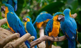 Macaws - Arist Xiong