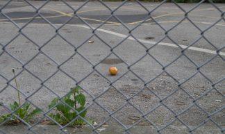 forbidden fruit - DaveBleasdale