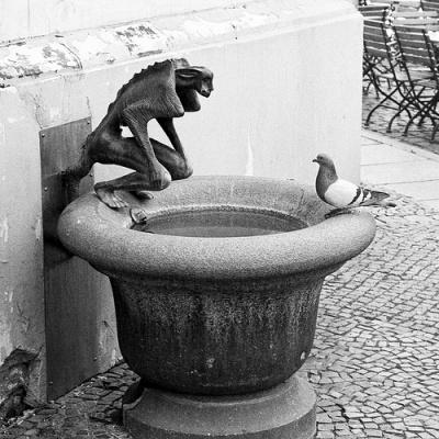 cc Flickr GörlitzPhotography Devil vs Dove