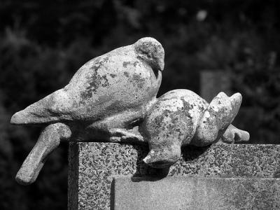 cc Flickr Jaroslav A. Polák Dead Dove on the Gravestone