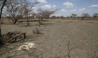 The remains of an animal in a dried up river bed, in drought-hit northern Kenya - DFID - UK Department for International Development