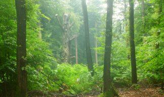 Alley Beech Wood - Nelis Zevensloot