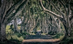 THE DARK HEDGES  Northireland - rogerbirchler