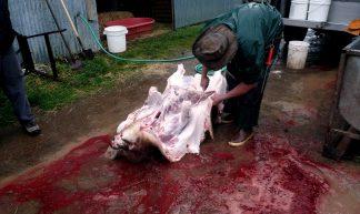 Pig Slaughter - Edward Dick
