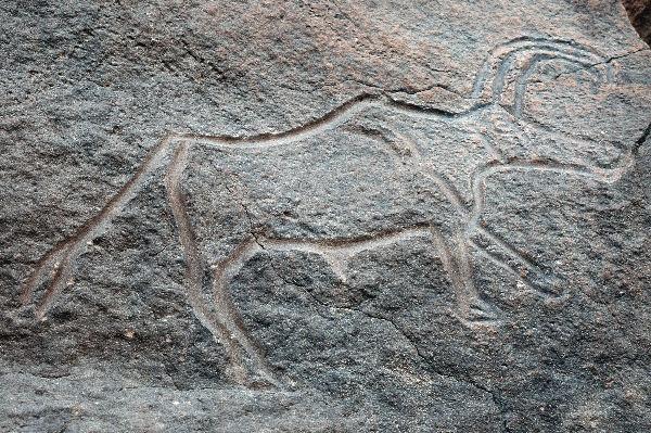 Een langhoorn-buffel (Wadi Mathendous; (c) Livius.org)