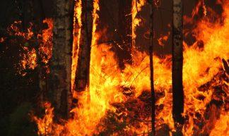 Yugansky nature reserve fire - Tatiana Bulyonkova