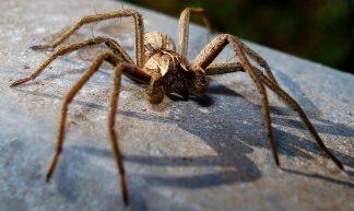 Spider - Mick Talbot