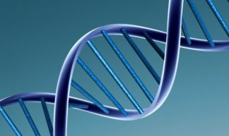 DNA model - Caroline Davis2010