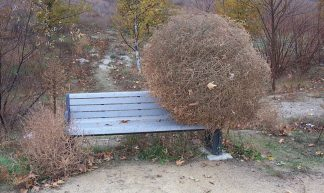 Tumbleweed on a Bench - Nogwater