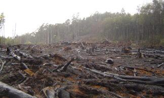 Deforestation - crustmania