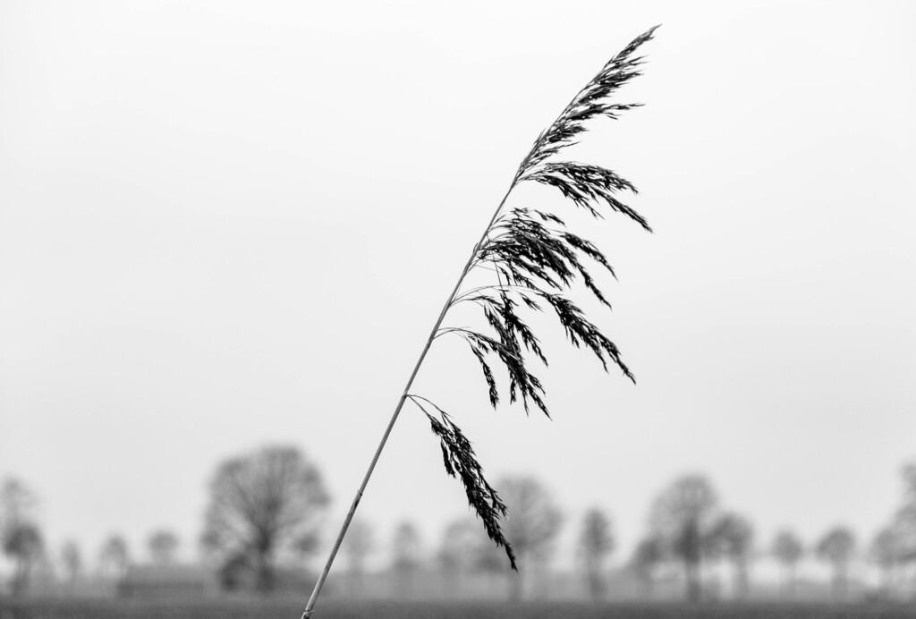 Pluim alleen. (c.c. Maria Willems)